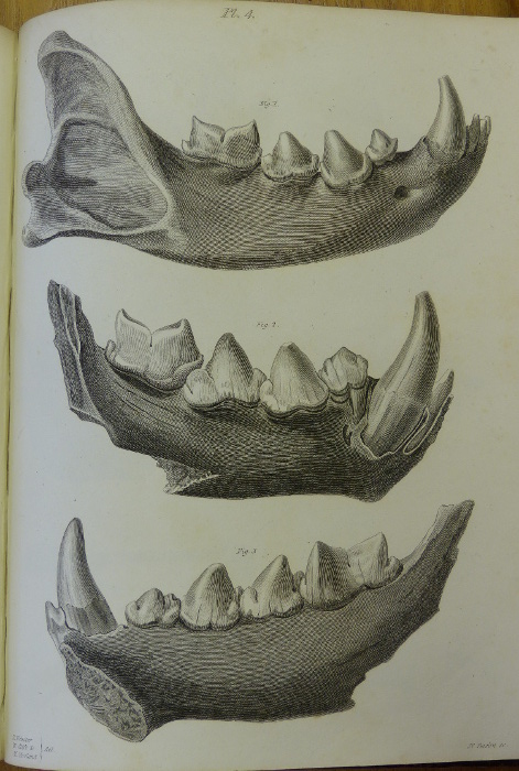 Buckland plate 4