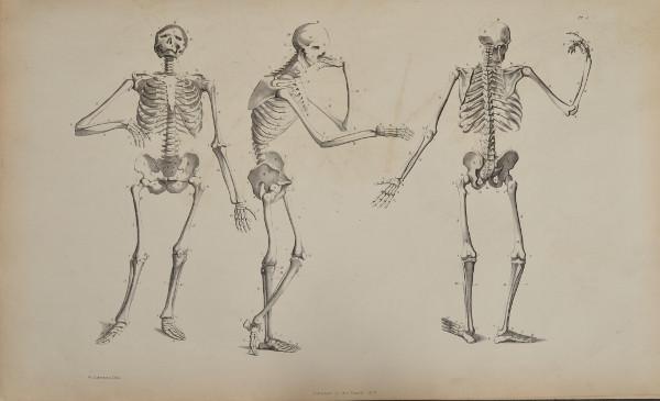 Flaxman plate skeletons