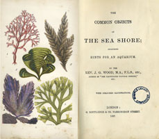 including hints for an aquarium / by J.G. Wood (London, G. Routledge & Co., 1857) STORE 176:16