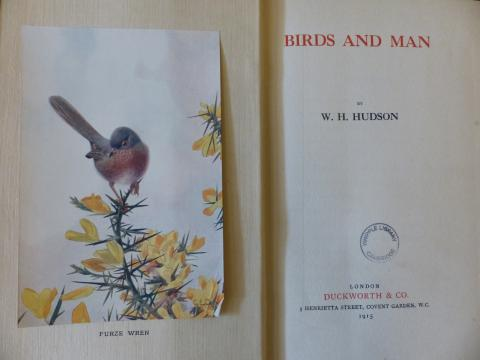 Birds and man / W.H. Hudson STORE 211:58
