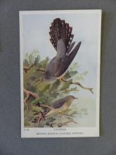 Cuckoo postcard