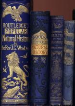 Spines of books by the Rev. J.G. Wood in the Whipple Library collection