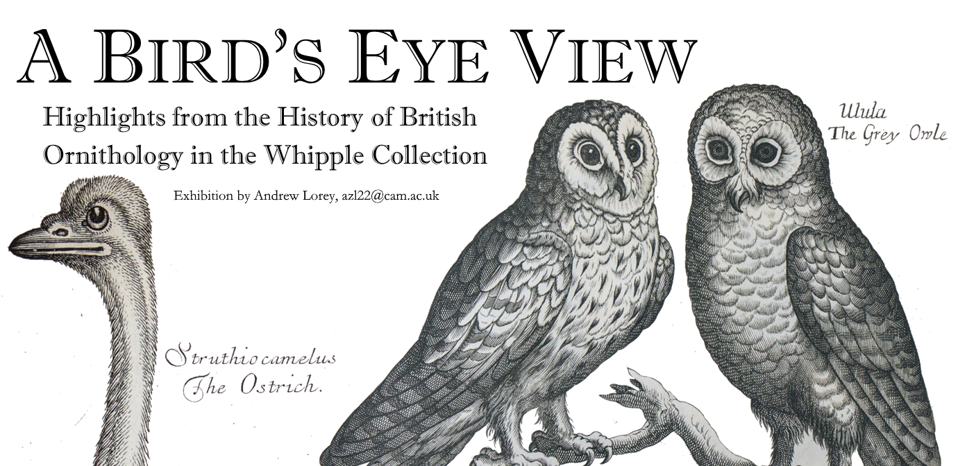Poster: A bird's eye view - highlights from the history of British ornithology in the Whipple collection