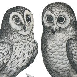 The head of an ostrich and two owls sitting on a branch. Engravings.