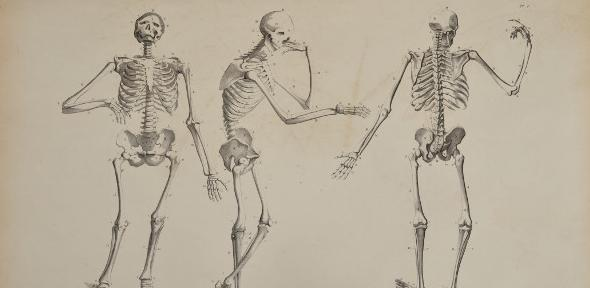 Lithograph of three skeletons, in various upright poses